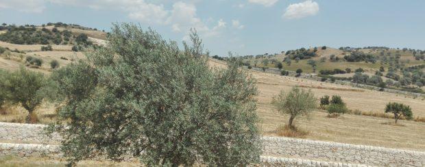 Countryside Ragusa